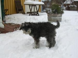vinter-2008-mikaels-bilder-005