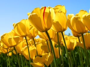 Än så länge står naturen i blom...